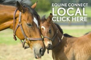 directory of equine services and professionals