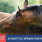 10 Best Fly Sprays for Horses