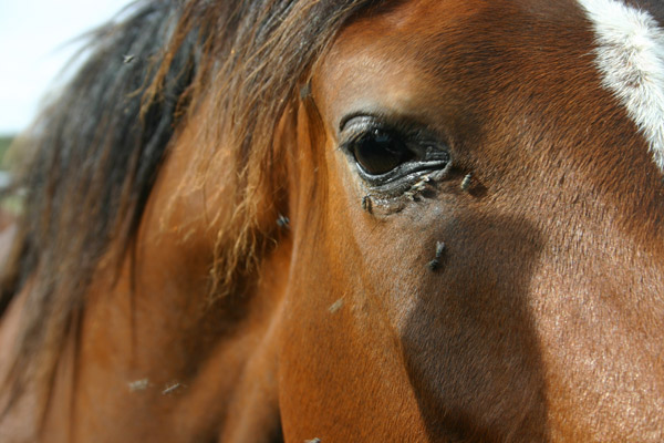Top 23 ways to eliminate and protect your horse and barn for How to treat barn wood for bugs