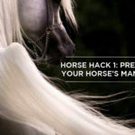 Horse Hack: Secret Brush to Preserving Your Horse's Mane & Tail