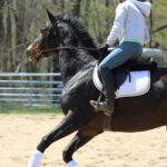 Why Pulling on your Horse's Face Doesn't Work… and How to Stop