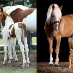 Canine- Equine Dopplegangers:  37 Horses that Have Matching Dogs!