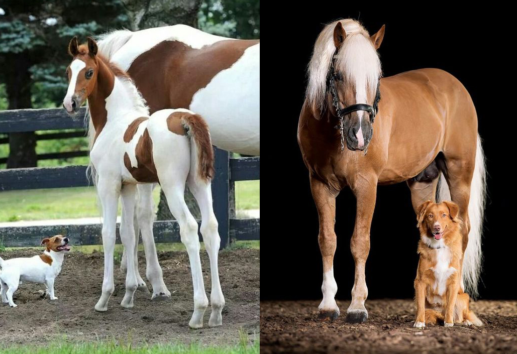 canine equine dopplegangers 37 horses that have matching