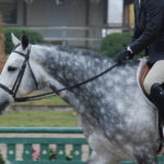 Transitional Period: The Unavoidable Equestrian HIIT Training You NEED to Become a Better Rider