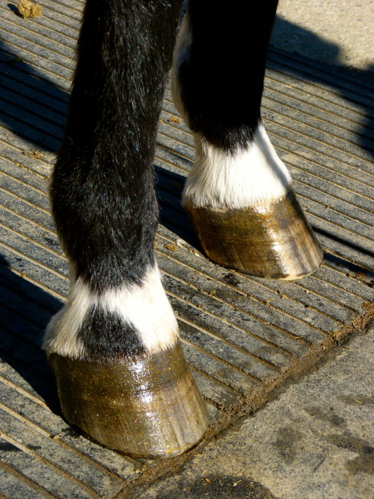 Pony Glam Colored Hoof Polish Dressing For Ponies And Horses
