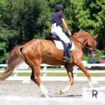 Rocket Man's Mission: The Amateur's Road to FEI Dressage Competition